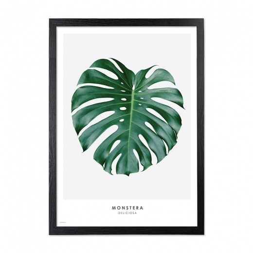 Cult Living Monstera Palm Printed Framed Poster, Green, A2